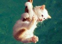 Дискретный обзор: И кот и рок-и ролл, Рецепт дружбы с кошкой