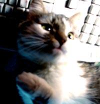 Кошка - Тимошка!