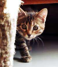 Дискретный обзор: И кот и рок-и ролл,