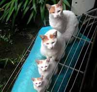 Традиционные деревенские кошки
