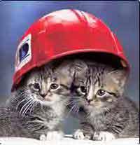 Городские кошки