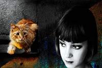 Дискретный обзор: И кот и рок-и ролл, Кот в пустой квартире