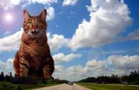 Дискретный обзор: И кот и рок-и ролл, Время рыжих котов