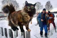 Дискретный обзор: И кот и рок-и ролл, Любовь и рок-н-ролл