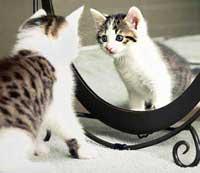Дискретный обзор: И кот и рок-и ролл