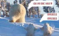 Тубольцев: Медведы и переведы