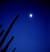 Тубольцев: Я и солнце (фрагменты из моего дневника)