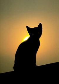Испытание черным котом