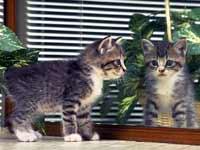 Милый Котя-Коток