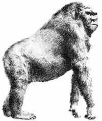 Гигантопитеки уступили место Homo sapiens