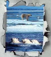 Ю. Тубольцев: Медвед, как предпосылка сексуальной революции