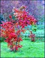 Осень пахнет, как весна