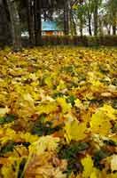 Золотой разграблен сад...