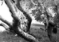 Виктор Сорокин +1971 Ja+kamennye-berezy