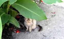 Кот в лопухах
